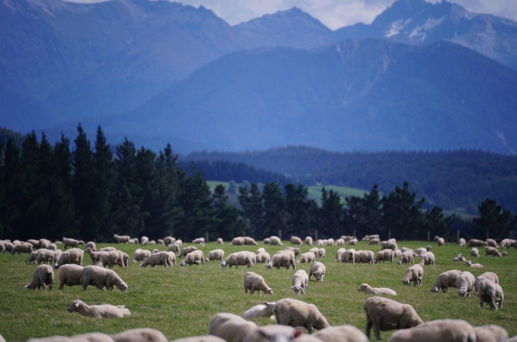 Farmstay New Zealand