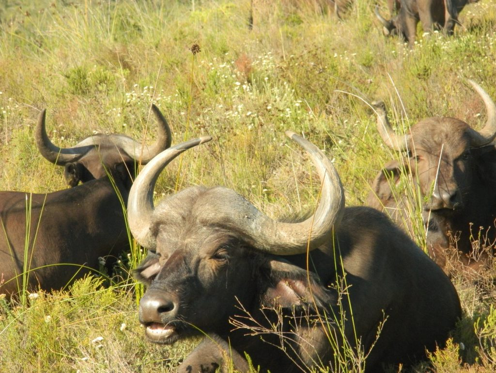 Thinking of going to South Africa? We have all the reasons why you need to go now. 4