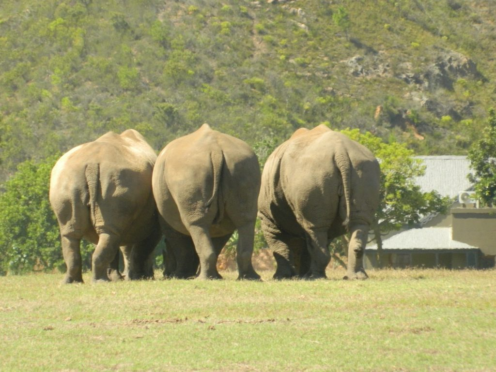 Thinking of going to South Africa? We have all the reasons why you need to go now. 3