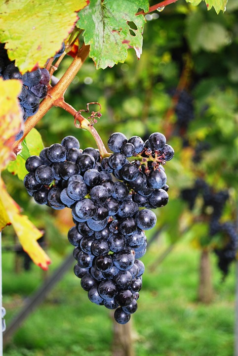 Visit the French vineyards and increase your knowledge in winemaking 1