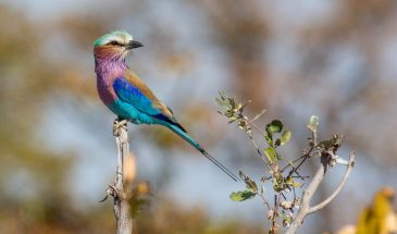 Eastern Cape Bird & Wildlife Sanctuary, South Africa 9
