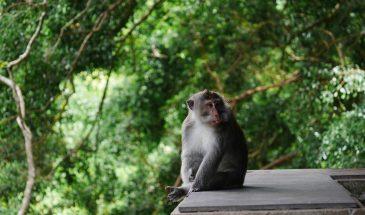 Southern Cape Primate Sanctuary 3
